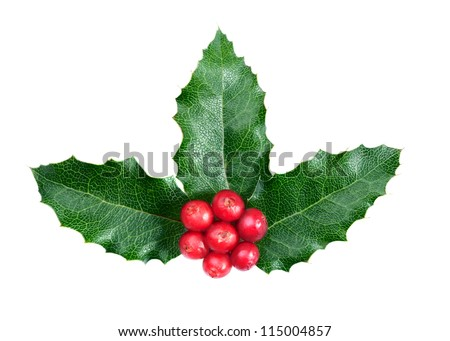 Christmas decoration. Holly with berries on the white background - stock photo