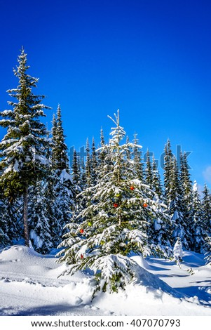 Christmas decoration on snow covered tree in the forest at the village of Sun Peaks in the Shuswap Highlands of British Columbia, Canada - stock photo