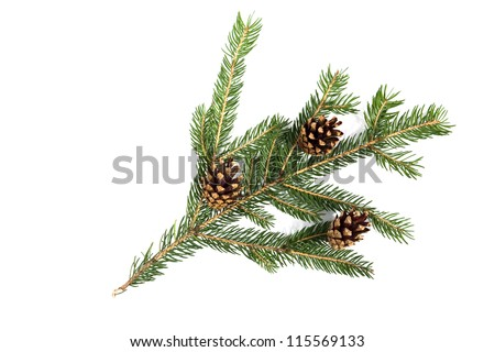 Christmas decoration - pine tree branch with cones - stock photo