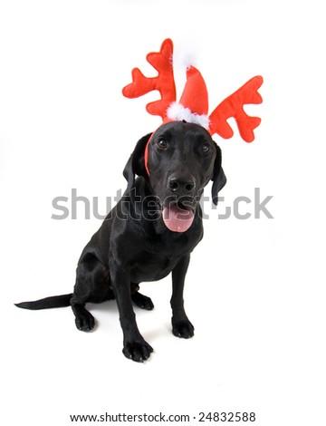 christmas dog - stock photo