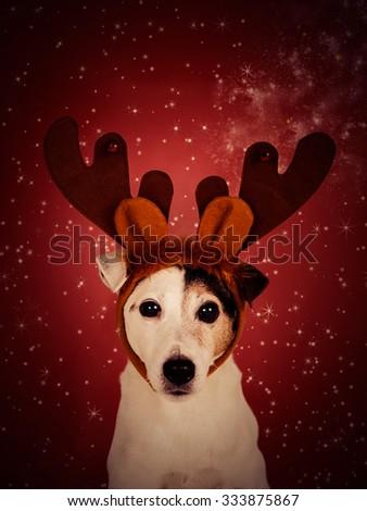 Christmas dog background.  - stock photo