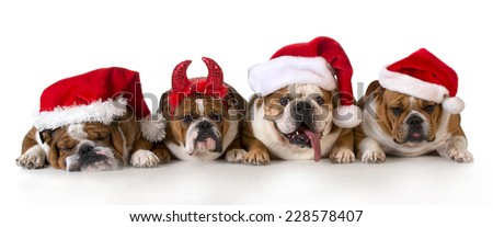 christmas dog - cute christmas concept with one naughty dog in a bunch of Santa's - stock photo