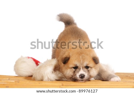 Christmas dog with red Christmas hat. - stock photo