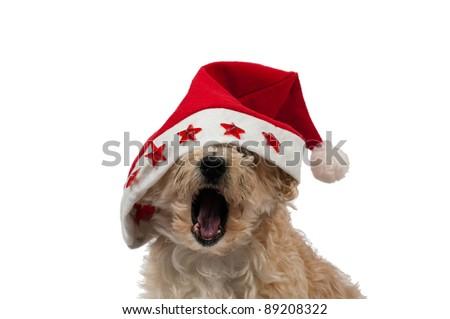 Christmas Dog Yawning - stock photo