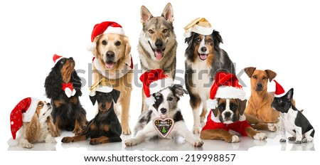 Christmas dogs - stock photo