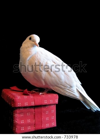 Christmas Dove Red Gift - stock photo