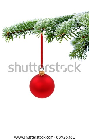 Christmas evergreen spruce tree and red glass ball - stock photo