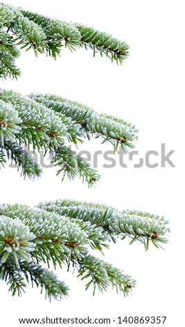 Christmas evergreen spruce tree with frost on white, holiday background - stock photo