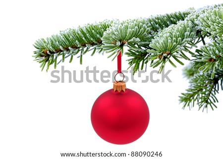 Christmas  evergreen tree and red glass ball - stock photo