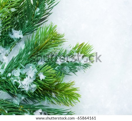 Christmas Fir Tree over Snow.Winter Background - stock photo