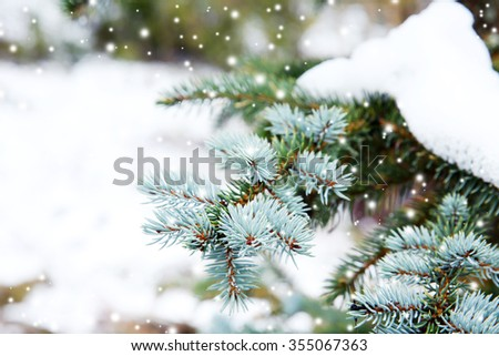 Christmas fir trees with fresh natural snow, snowstorm - stock photo