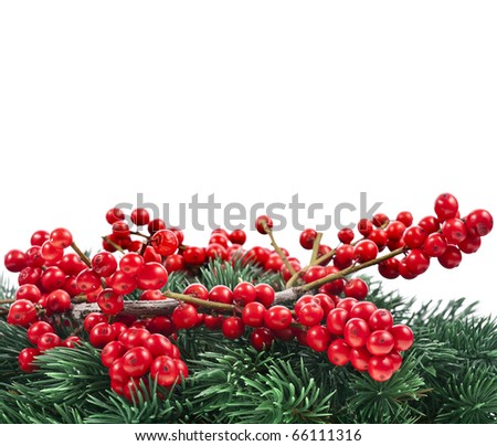 Christmas fir twig with red berries ilex isolated on white - stock photo