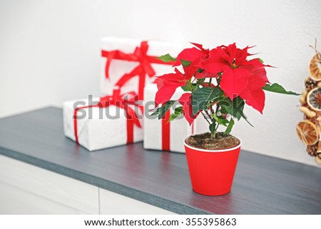 Christmas flower poinsettia and decorations on shelf, on light background - stock photo