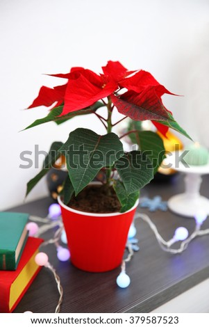 Christmas flower poinsettia and decorations on shelf with Christmas decorations, on light background - stock photo