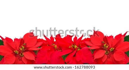 Christmas frame from poinsettia flowers isolated on white  - stock photo