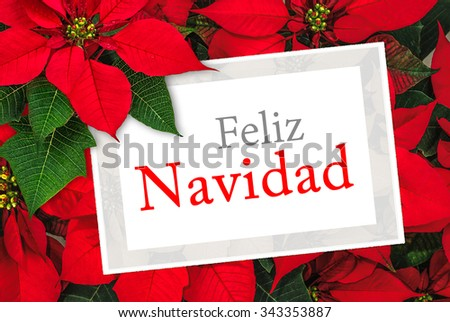 Christmas greeting card with text Feliz Navidad, poinsettia decoration - stock photo