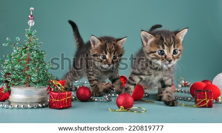Christmas group portrait of little kittens with holiday decorations - stock photo