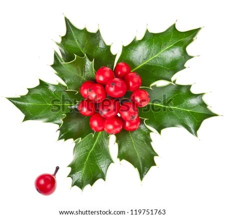 christmas holly Ilex isolated on white background - stock photo