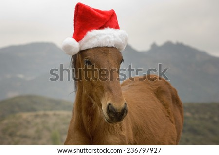 Christmas Horse with a red stocking cap - stock photo