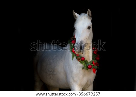 Christmas image of a white horse wearing a wreath and a bow on black background - stock photo