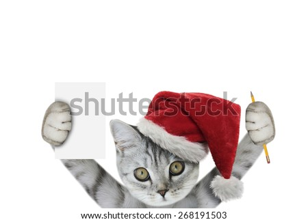 christmas kitten holding - stock photo