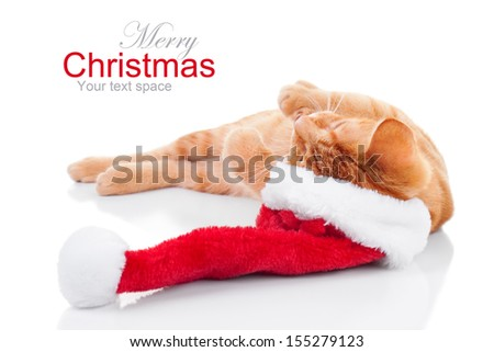 Christmas kitten in santa hat - cat - stock photo
