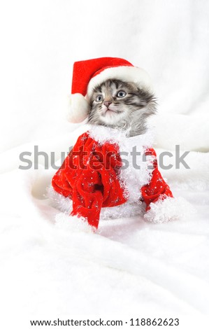 Christmas kitten in Santa stocking hat and scarf isolated on white - stock photo