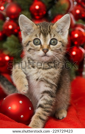 Christmas kitten with red christmas decoration - stock photo