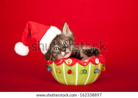 Christmas La Perm kitten sitting in festive bowl with santa cap hat on red background - stock photo