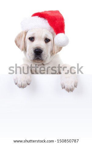 Christmas Labrador puppy dog wearing santa hat and holding sign or banner isolated on white - stock photo
