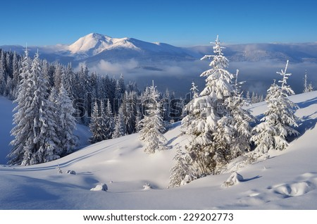 Christmas landscape. Spruce forest in winter - stock photo