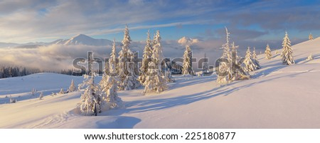 Christmas landscape. Winter panorama with snow covered fir trees. Sunny morning in the mountains. Carpathians, Ukraine, Europe - stock photo