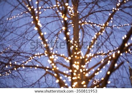 Christmas light on a tree - stock photo