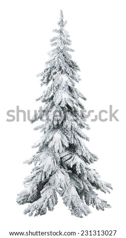 Christmas pine covered with snow - stock photo