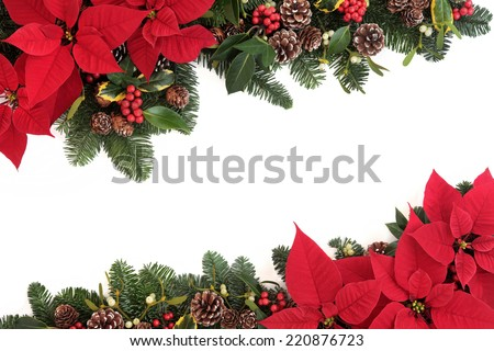 Christmas poinsettia flower background border with holly, ivy, mistletoe, pine cones and fir leaf sprigs over white. - stock photo