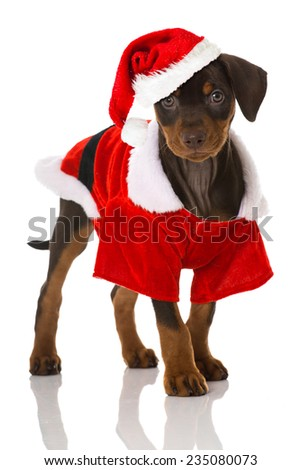 Christmas puppy - stock photo