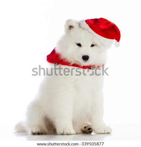 Christmas puppy.  Merry christmas - stock photo