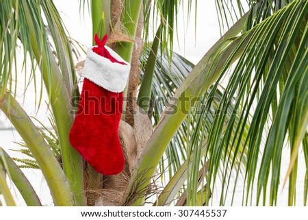 Christmas sock on coconut palm tree. Holiday concept  - stock photo