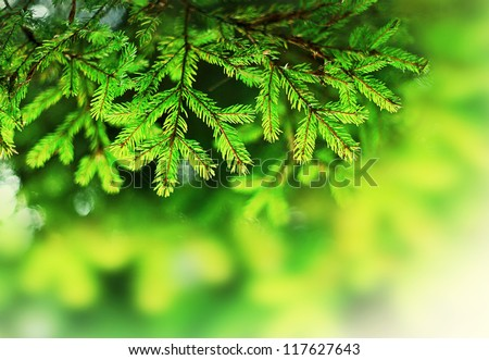 Christmas tree background with selective focus. Ideal for background. - stock photo