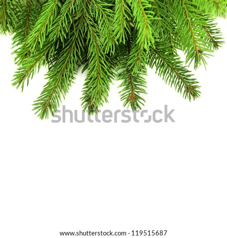 Christmas tree branches - stock photo