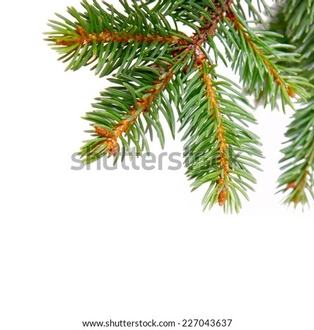 Christmas tree branches. - stock photo