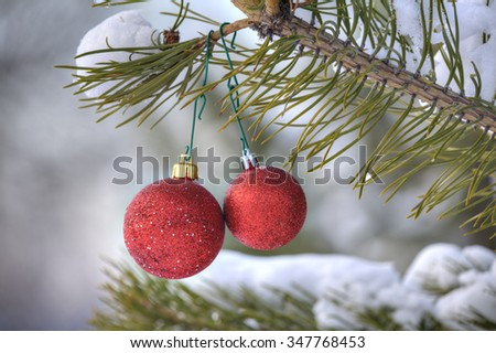 Christmas tree decorations, two red ball hanging on a pine branch in the snowy forest. - stock photo