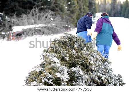 christmas tree - husband and wife having cut down their own tree are pulling it out of the forest. blown highlights in snow, focus on tree. - stock photo