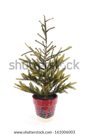 christmas tree in a red pot - stock photo