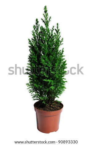Christmas tree isolated against white background, selective focus. - stock photo