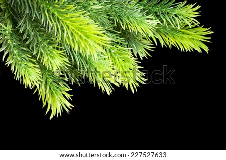 Christmas tree isolated on the black background - stock photo