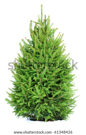 Christmas Tree . Isolated over white background - stock photo