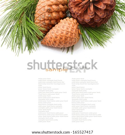 Christmas tree or Pine Tree and cones isolated on white - stock photo