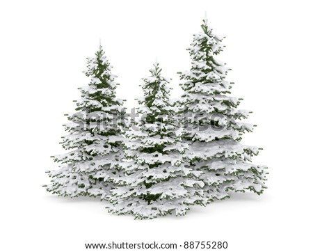 Christmas trees with snow isolated on white . - stock photo