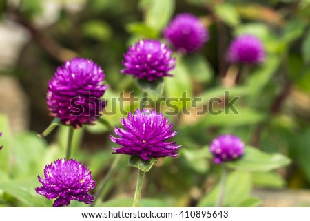 Chrysanthemun flower with blurred background - stock photo